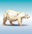 Color sketch of a polar bear vector image