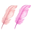 Pink decorative watercolor feathers vector image