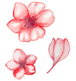 Watercolor red flowers vector image vector image