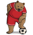 bear athlete stepped foot on soccer ball vector image