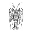 ink sketch of spiny lobster vector image
