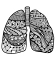 Hand drawn sketched lungs vector image