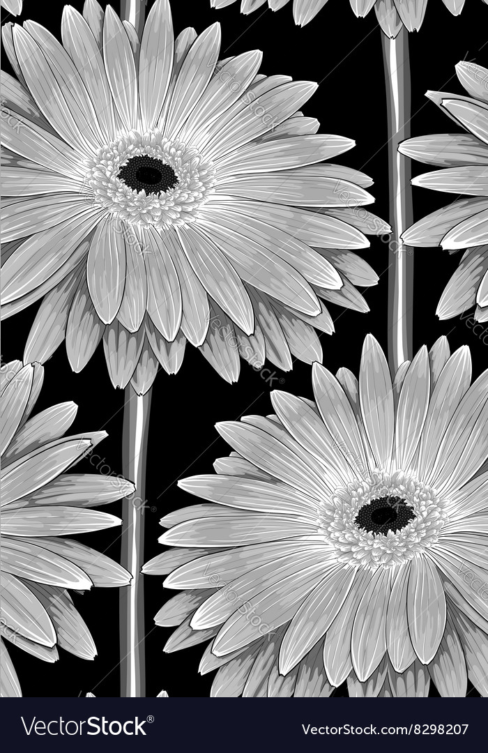 Black and white seamless background with gerbera vector