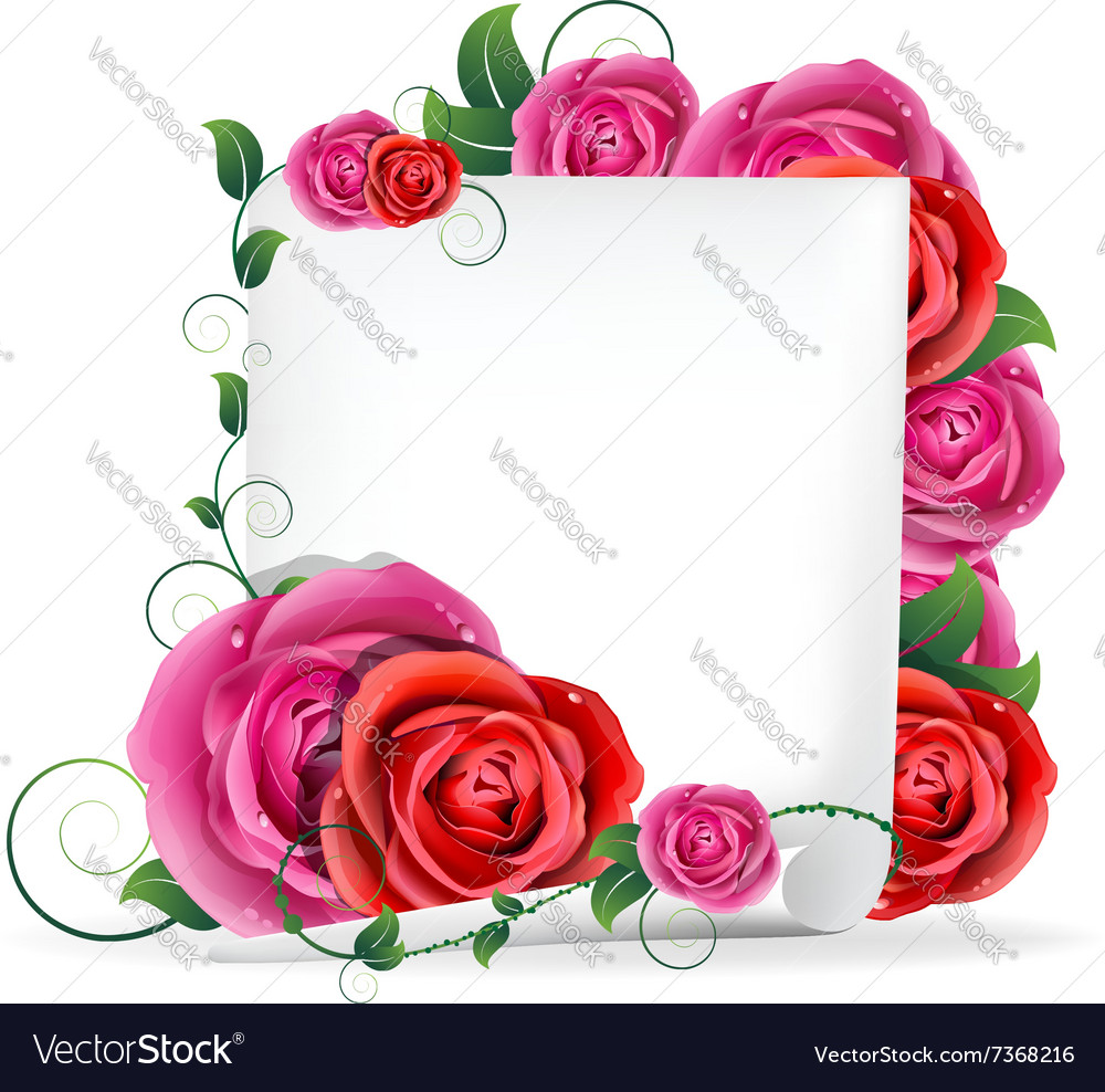 Roses and paper vector