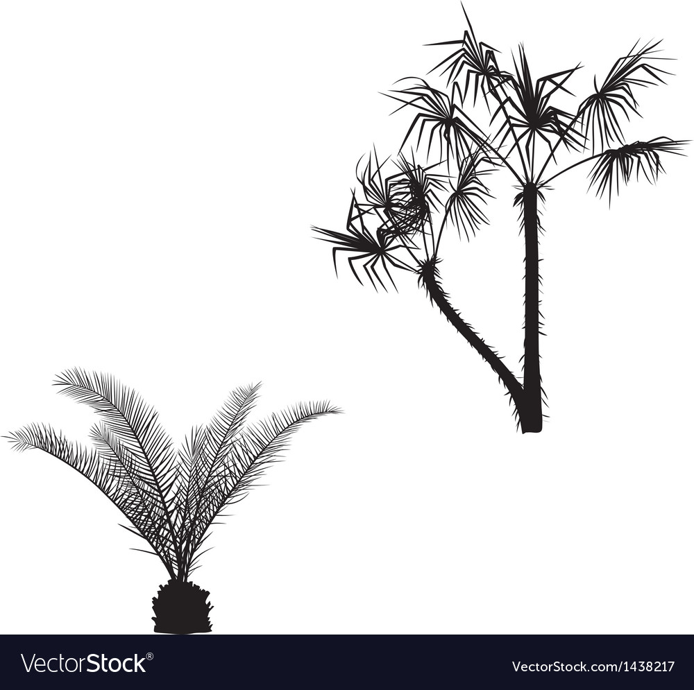 With palm silhouettes vector