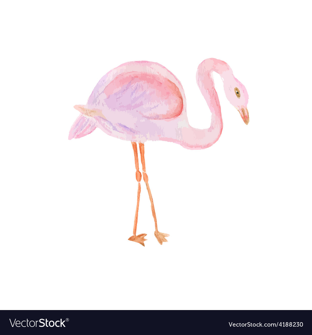 Watercolor painted of flamingo vector