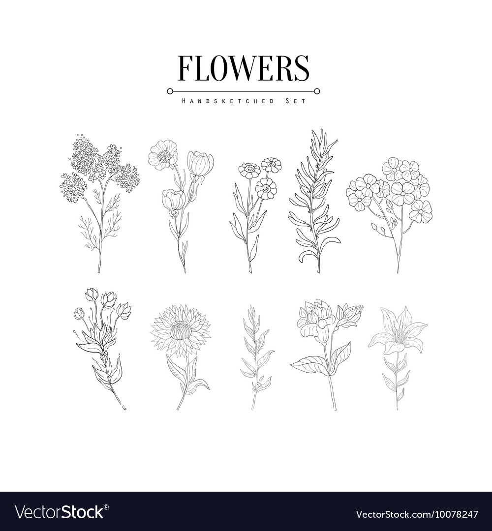 Flower herbarium hand drawn realistic sketch vector