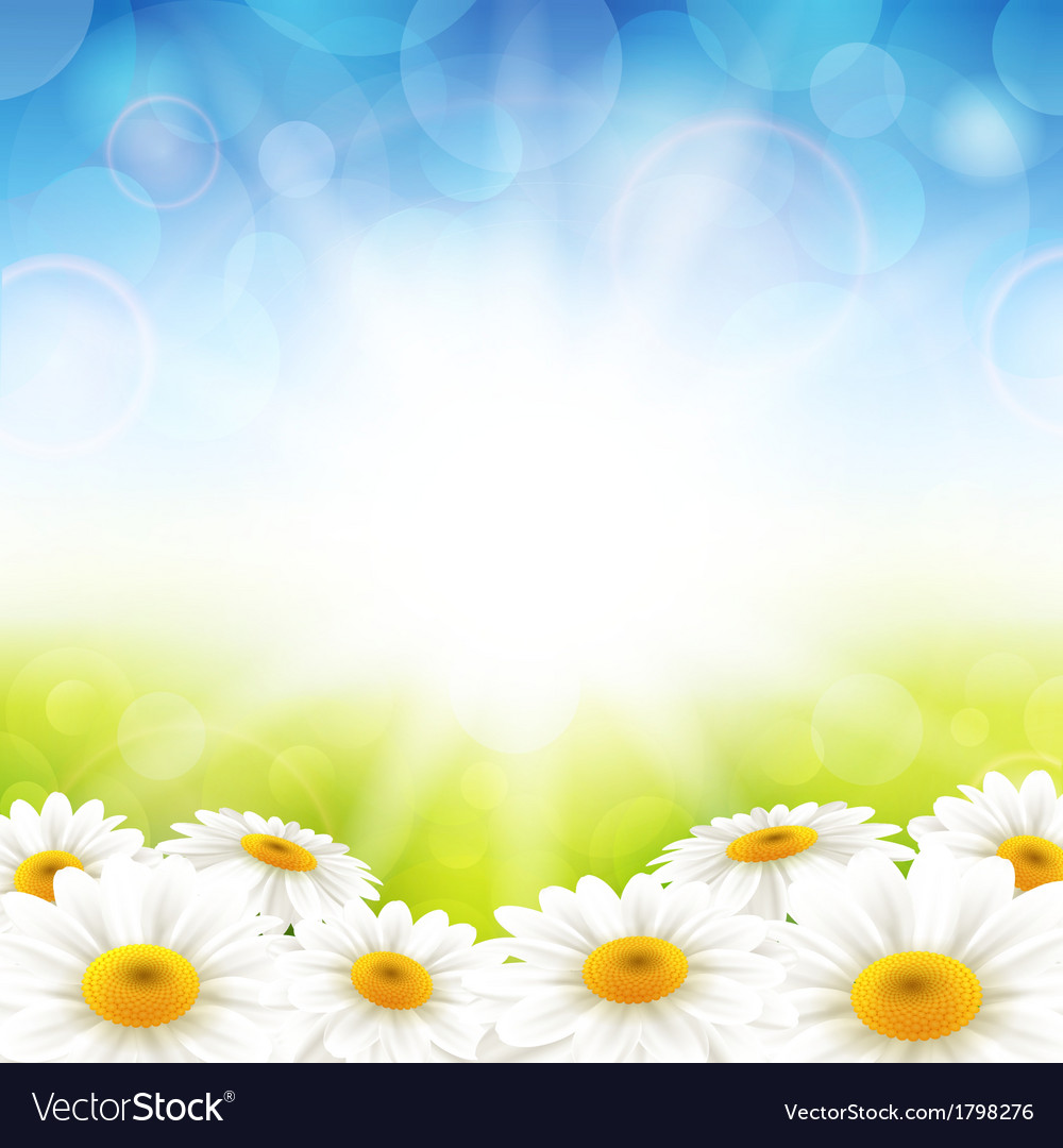 Flowers on the summer background vector