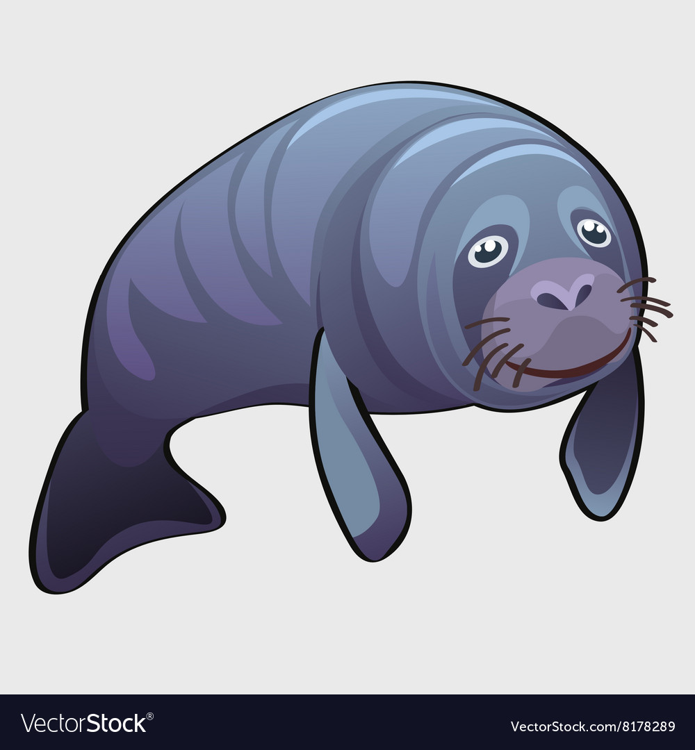 Grey thick marine seal cute animal vector