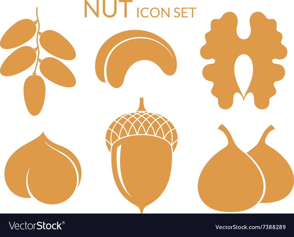 Nuts icon set isolated fruit on white vector