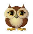 cute brown owl vector image