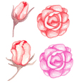 Watercolor red roses vector image vector image