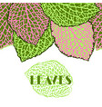 seamless border with decorative leaves natural vector image