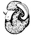 portrait of a merino sheep vector image