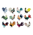 Set of colourful rooster on white vector image