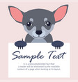 chihuahua with signboard isolated vector image