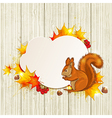 Fluffy squirrel and maple leaves vector image