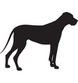 Great Dane Silhouette Vector Image