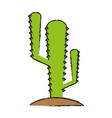 Cactus draw vector image