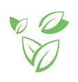 Tea leaves on white background vector image