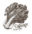 cabbage logo design template fresh vector image