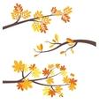 Autumn tree brunches flat border set vector image