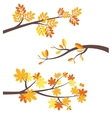 Autumn tree brunches flat border set vector image