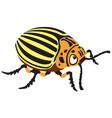 potato beetle vector image vector image