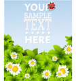 Summer background template vector image vector image