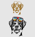 The Cool Dog Hand Drawing vector image
