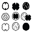 Walnut nutshell icons set vector image