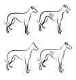 Greyhound dogs logo vector image vector image