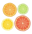 stylised orange lemon grapefruit lime on white vector image