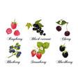 Relistic berries set vector image