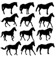 Set silhouette of horse vector image