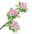 flowering branch1 vector image
