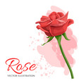 red rose isolated on white vector image