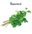 Peppermint vector image