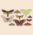 set of moths and butterflies vector image