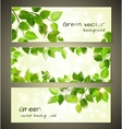 Green leaves banners vector image