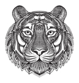 Hand drawn graphic ornate tiger vector image