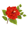 red hibiscus stem tropical flower vector image