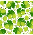 Seamless pattern with gooseberry vector image