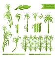Sugar cane decoration elements vector image vector image