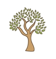 olive tree isolated icon design vector image