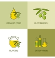 Organic olive thin line color logo concept vector image