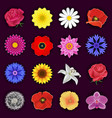 Set of spring or summer flower blossom isolated vector image