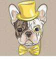 hipster dog French Bulldog breed vector image vector image