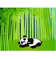 sleeping panda vector image vector image
