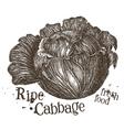 fresh cabbage logo design template fresh vector image